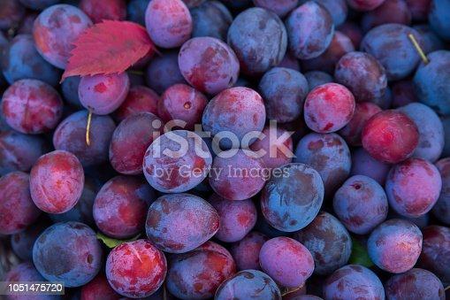 istock Ripe plum close-up as background texture. Harvesting 1051475720