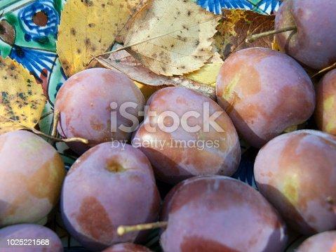 istock ripe plums macro 1025221568