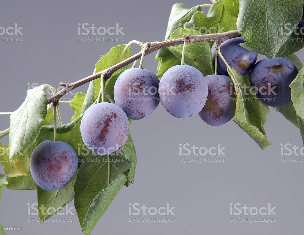 Ripe plums on a branch - Royalty-free Ağaç Stok görsel