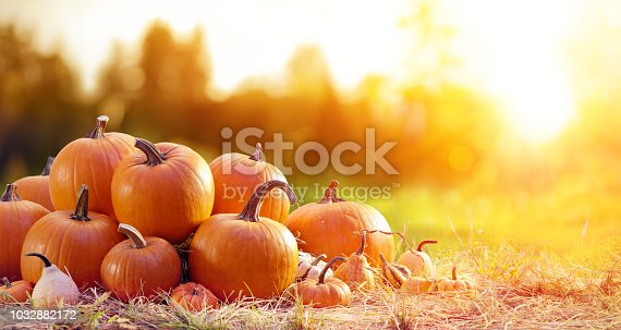 Group Of Pumpkins In Rural Landscape