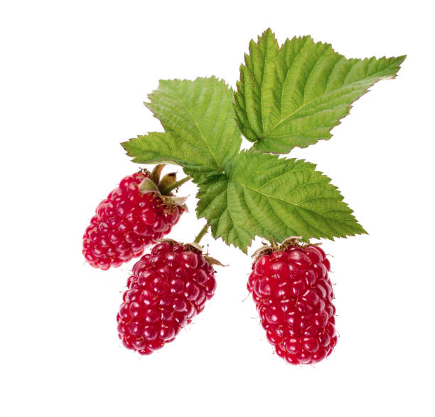 ripe raspberry with green leaf isolated on white background stock photo