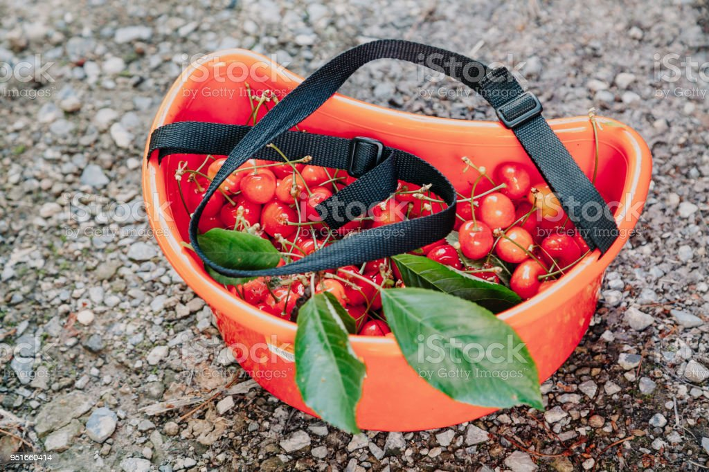 Ripe red cherry in plastic container stock photo