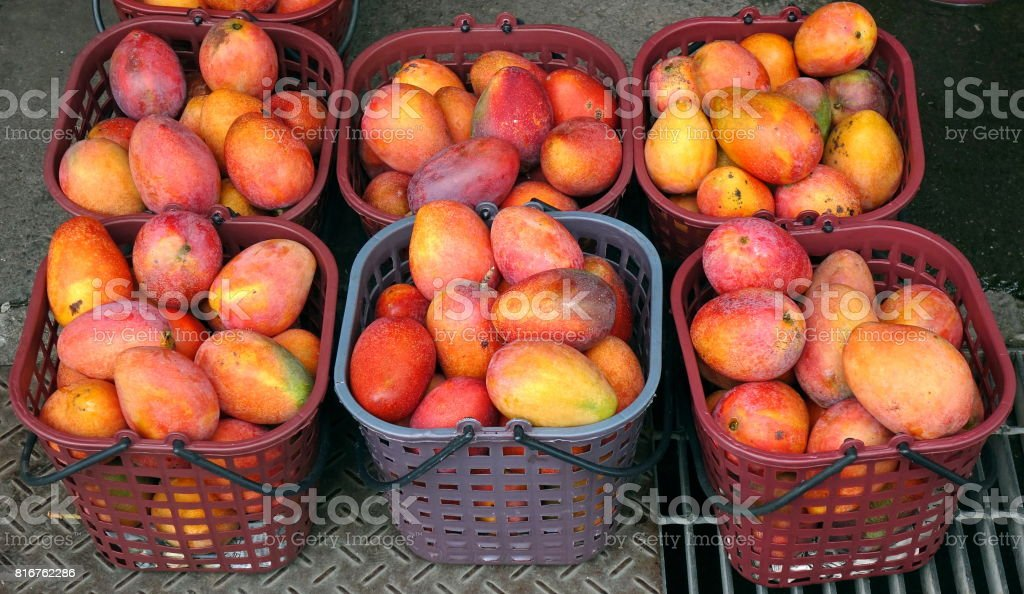 Ripe Red Mangoes for Sale stock photo