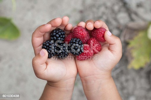 Ripe red raspberries and blackberries in the girl hands.. Healthy food and raspberry concept .