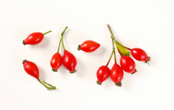 ripe rose hips twigs of rose hips on white background dog rose stock pictures, royalty-free photos & images
