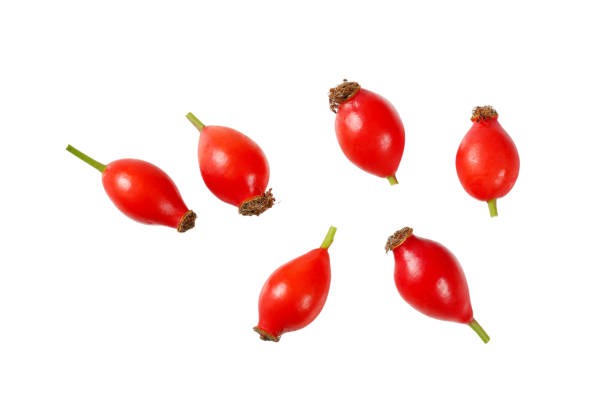 ripe rose hips group of rose hips on white background wild rose stock pictures, royalty-free photos & images