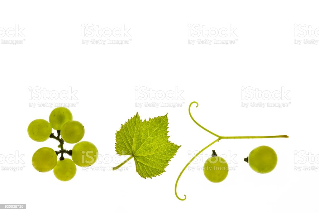 ripe Sauvignon Blanc grapes and leaf isolated on white background with copy space stock photo