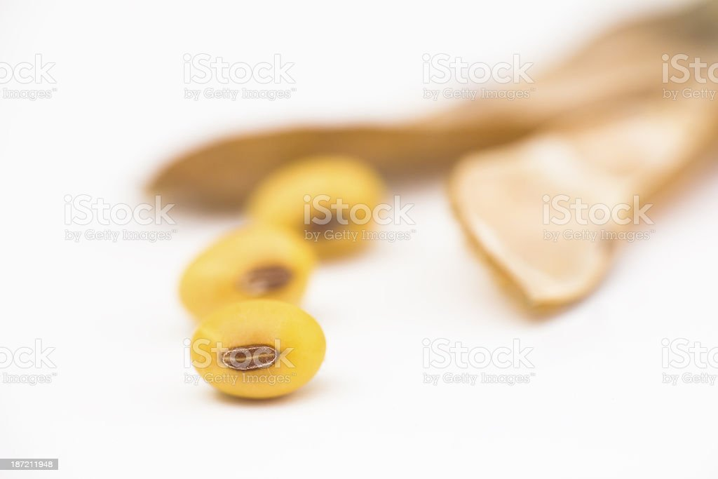 ripe soybean royalty-free stock photo