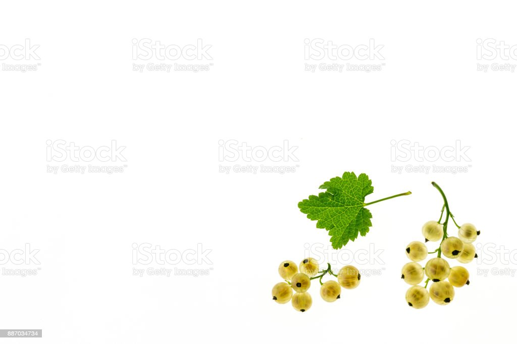 ripe white currant berries with leaf on white background with copy space stock photo