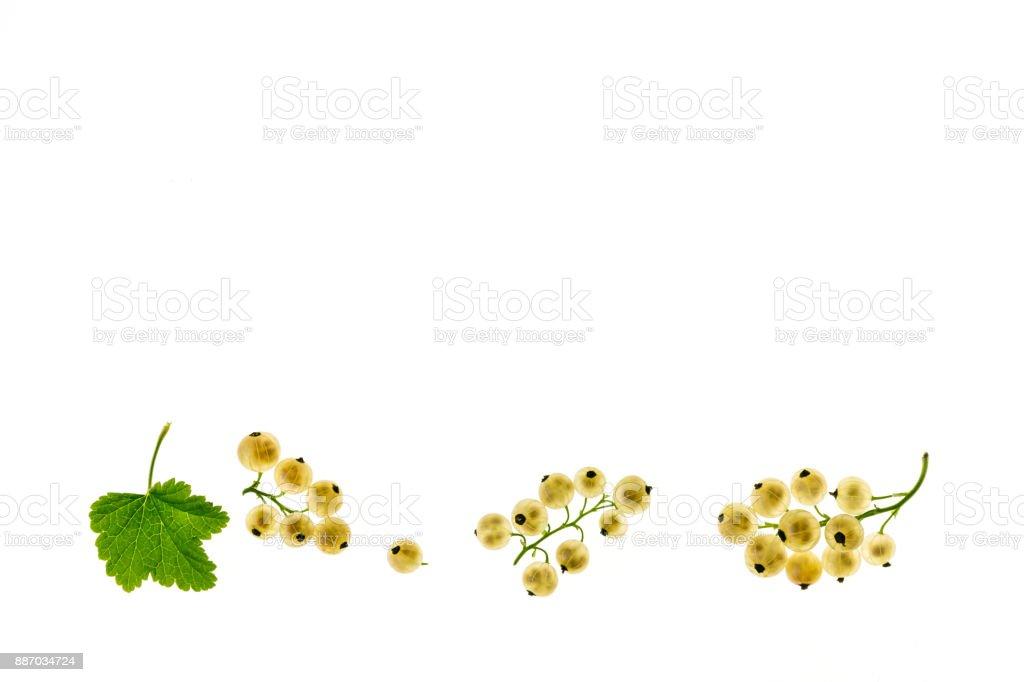 ripe white currants on white background stock photo