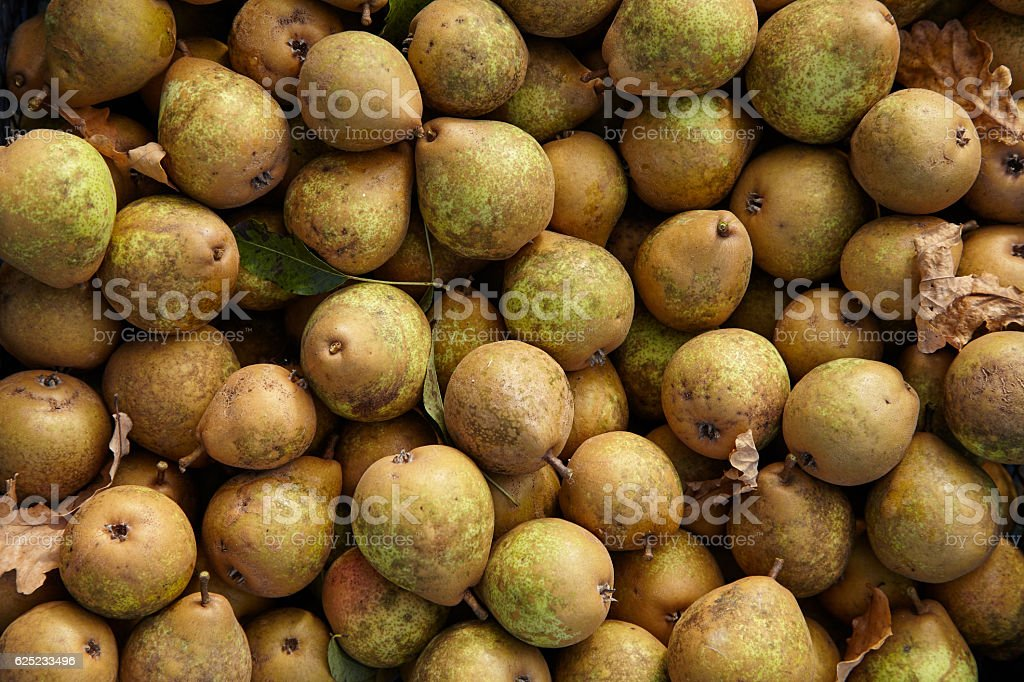 Ripen brown harvested pears – Foto