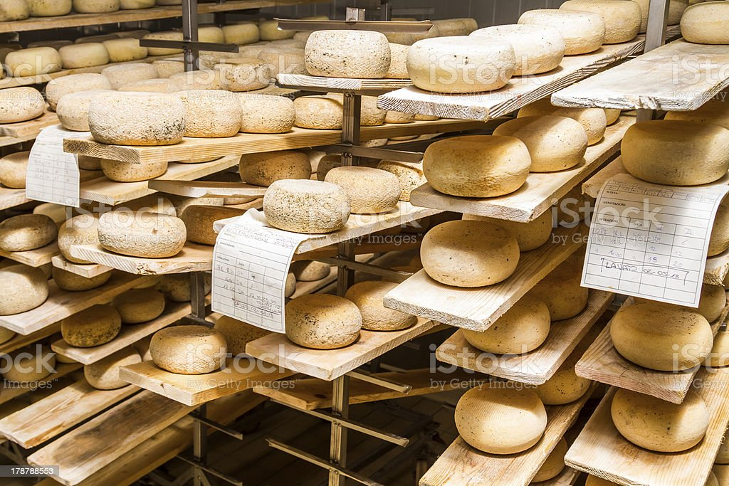Ripened cheeses lying in the cold storage stock photo
