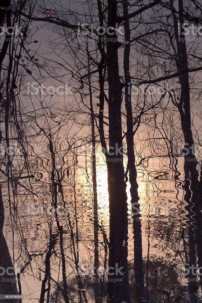 Ripple trees royalty-free stock photo