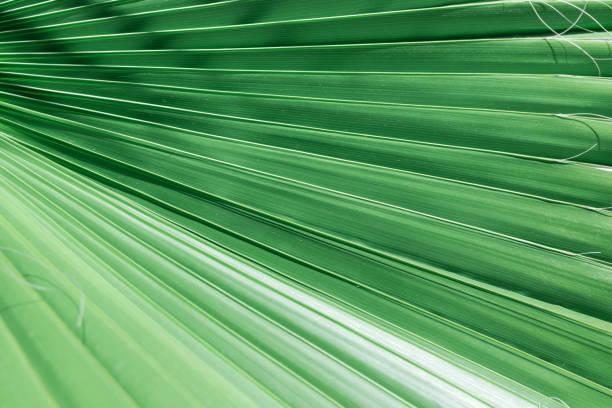 Wellige Akkordeon gefalteten Palmwedel mit Streifenmuster Dschungel jade grün. Tropische Natur Hintergrund. Bio-Kosmetik Thema Urlaub Spa Wellness. Kopieren Sie Raum. Kulisse für Text-Mode-blog – Foto