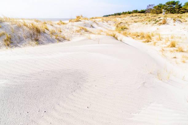ringar på sanddynen - sand dune sweden bildbanksfoton och bilder
