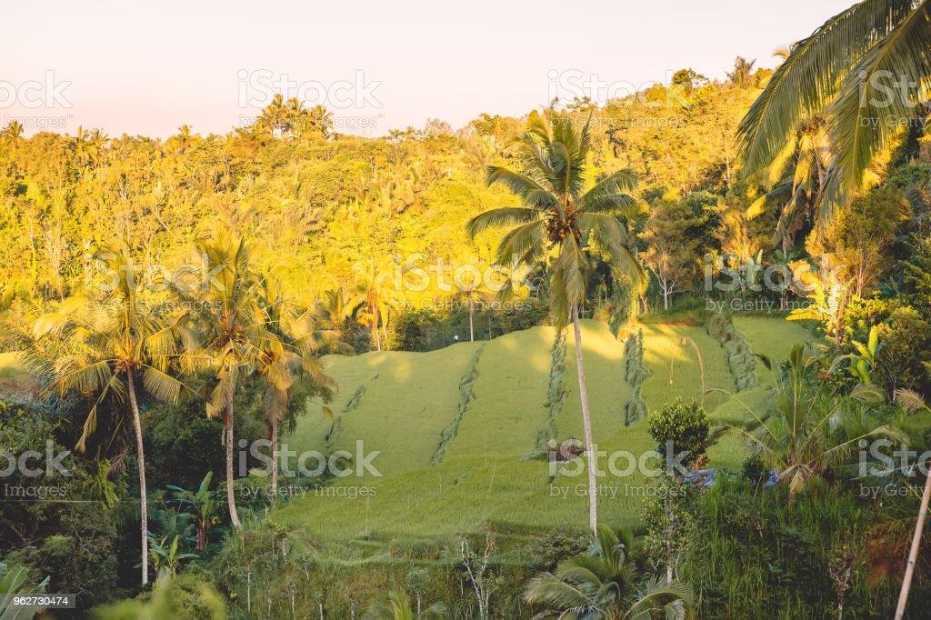 Aumento De Terrazas Con Palmas De Coco Tropicales Bali Y Por
