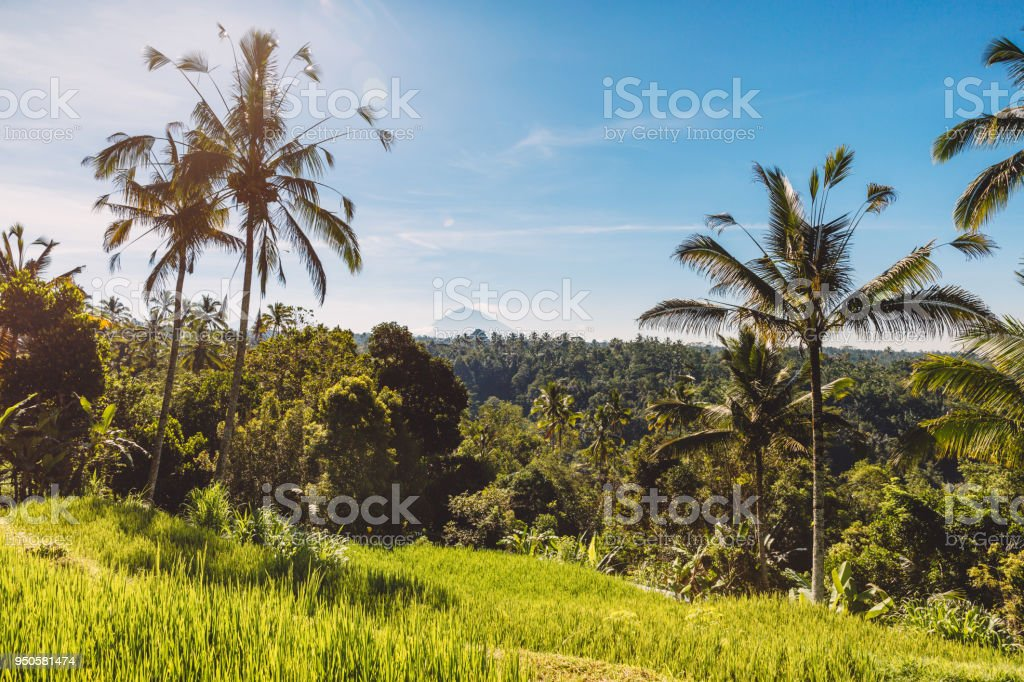 Aumento De Terrazas Con Palmas De Coco Tropicales En Bali Y