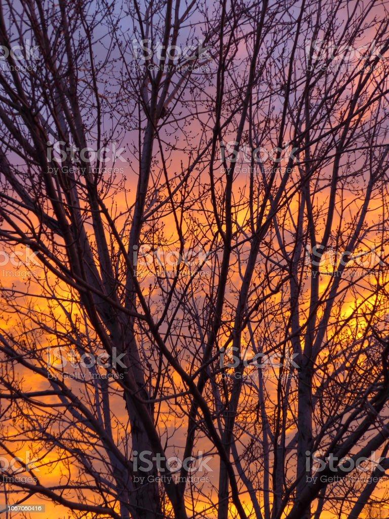 Rise Through the Tree stock photo