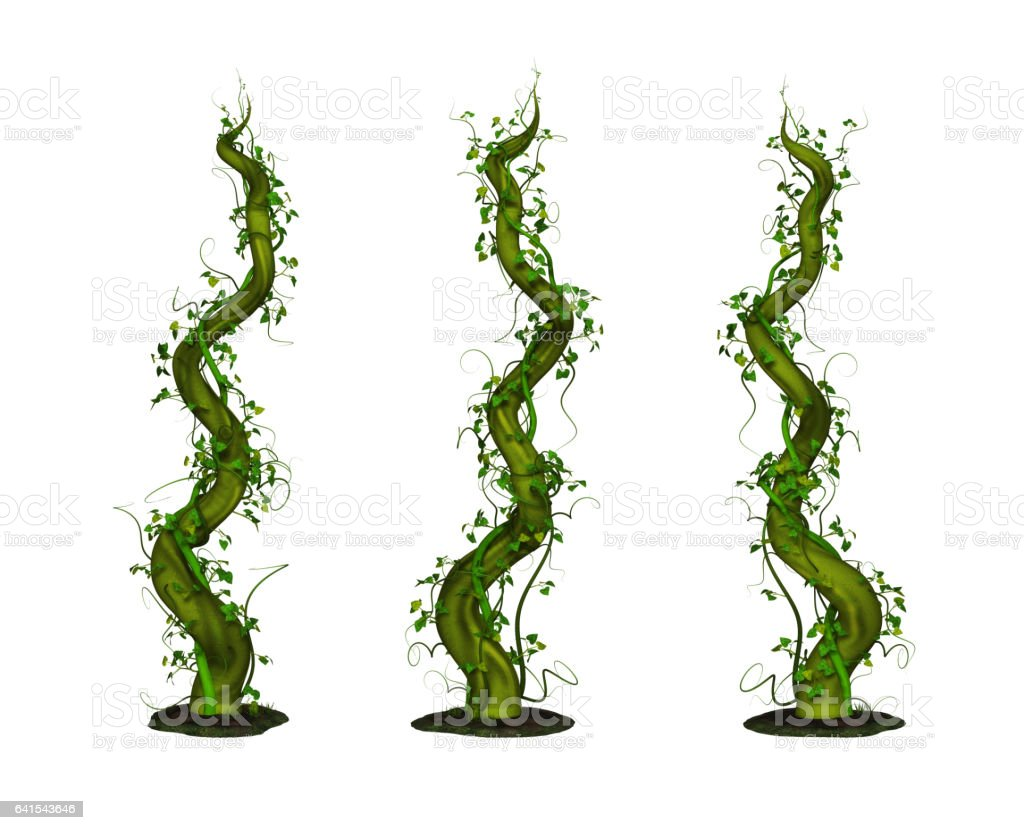 Rising Beanstalk stock photo