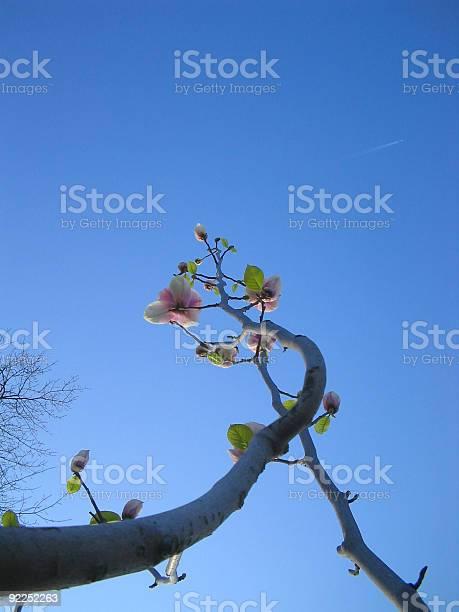 Photo of Rising Flowers