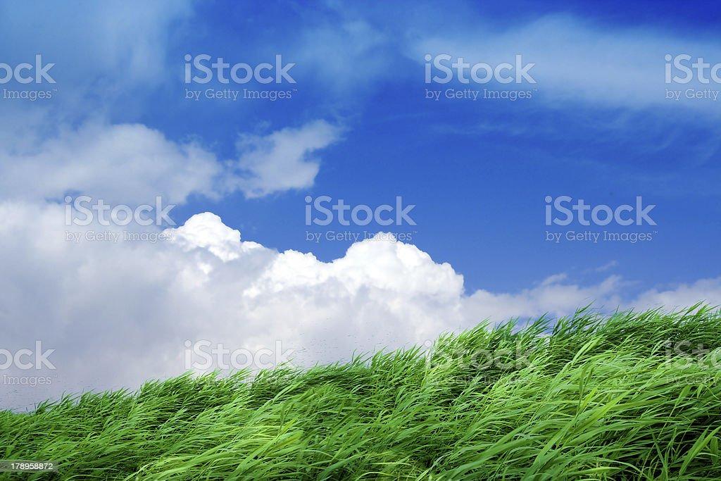 rising herb royalty-free stock photo