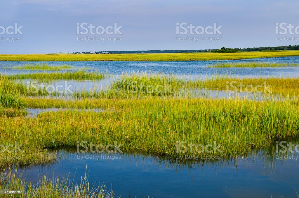 Rising Tide in the Marsh stock photo
