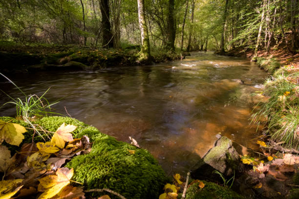 River Aisne lighted by warm sunlight in the autumn Sunlight warms the autumn river scene aisne stock pictures, royalty-free photos & images