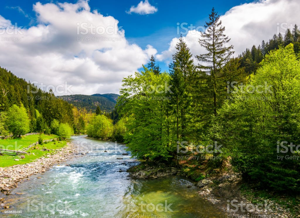 River among the forest in picturesque Carpathian mountains in springtime stock photo
