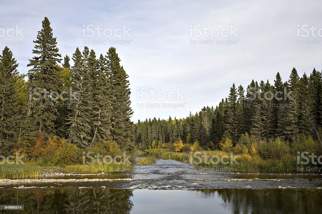River and Fir Trees stock photo