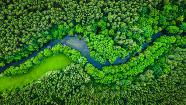 River and green forest in Tuchola natural park, aerial view stock photo