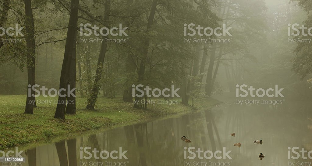 River And Trees stock photo