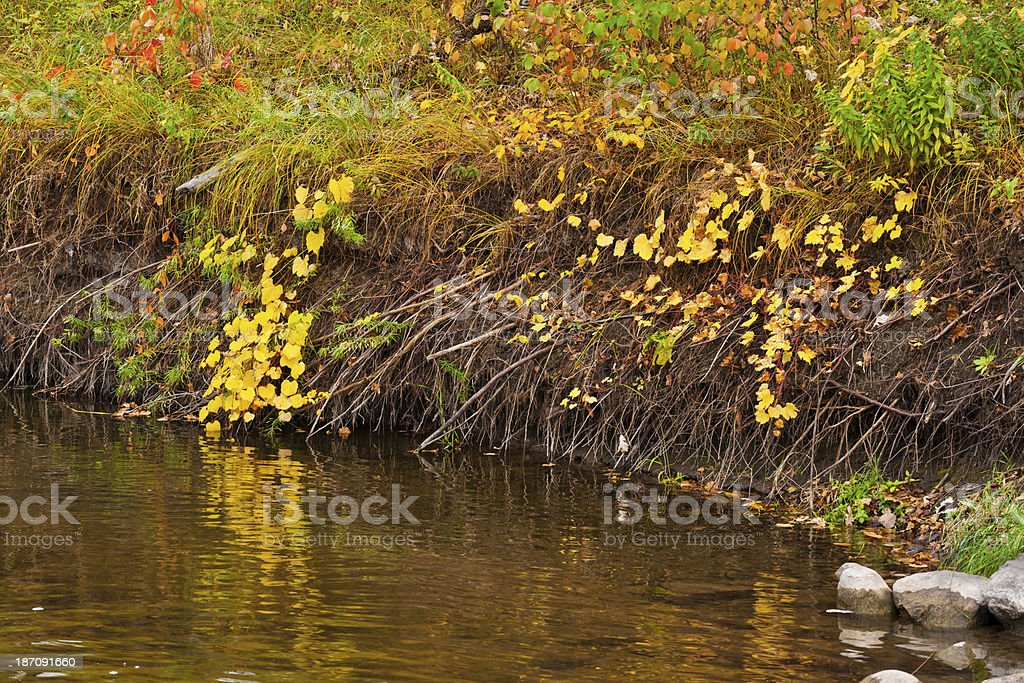 River Bank in Autumn Color royalty-free stock photo