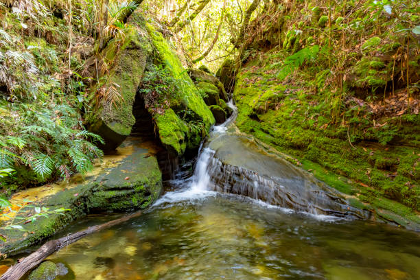 River between rain forest with mossy rocks stock photo