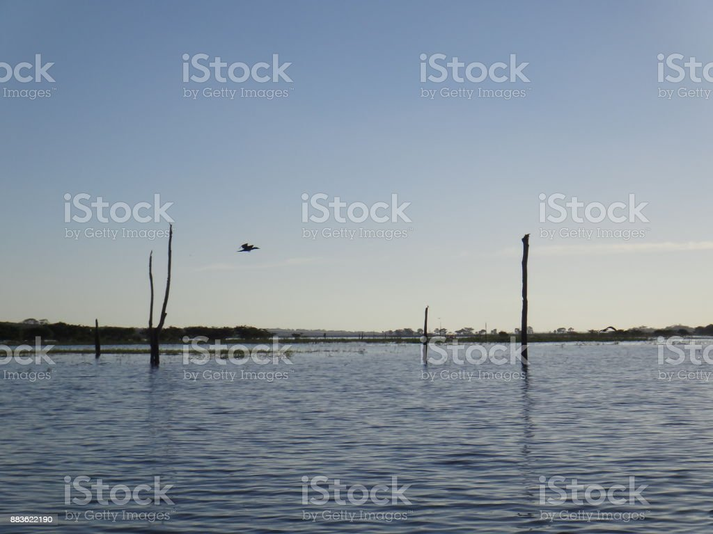 River - Bird stock photo