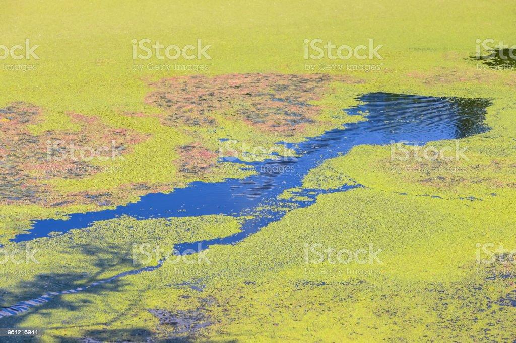 River Bosut in Vinkovci stock photo