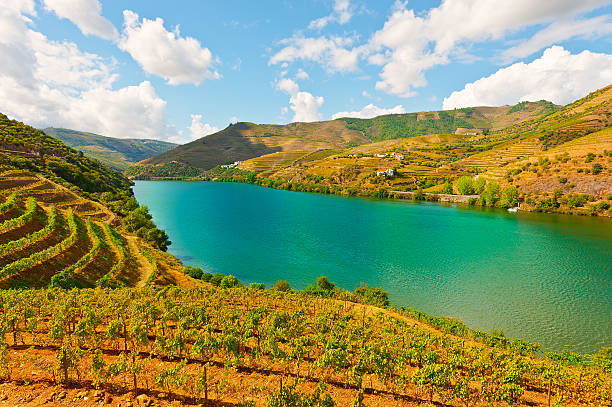 River Douro Vineyards in the Valley of the River Douro, Portugal duero stock pictures, royalty-free photos & images