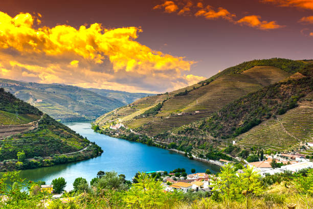 River Douro region at sunrise Travel in River Douro region in Portugal among vineyards and olive groves. Viticulture in the Portuguese villages at sunrise duero stock pictures, royalty-free photos & images