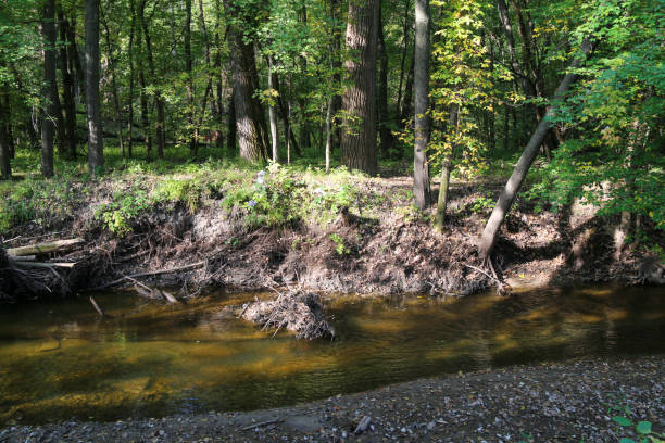 river edge riverbank brook creek with woodland forest beyond on a sunny afternoon stock photo