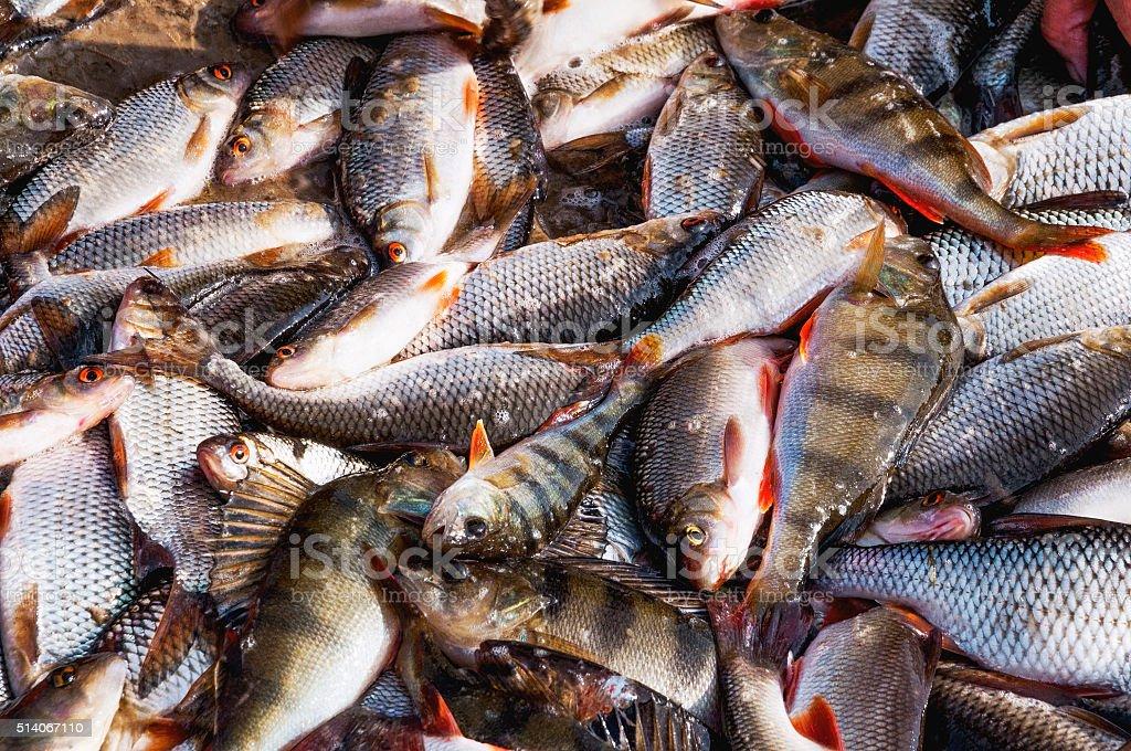 River fish . stock photo