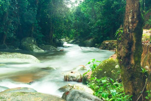 river flow in paraty, brazil - sgarbi foto e immagini stock
