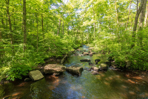 River flowing by rocks as it meanders through the forest. stock photo