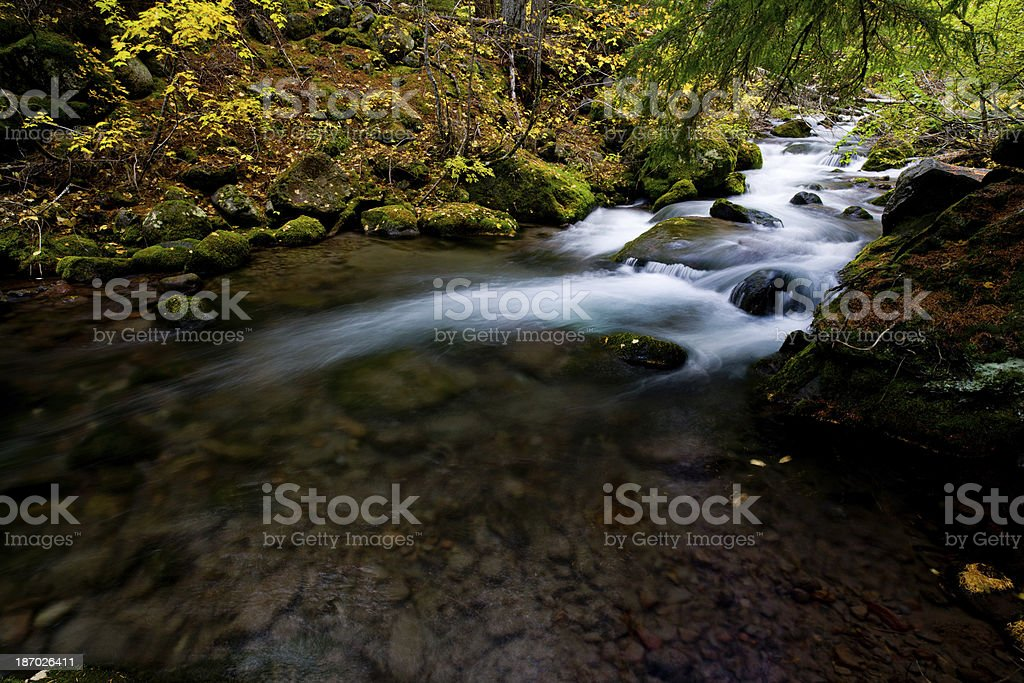 River flowing through forest in Autumn royalty-free stock photo