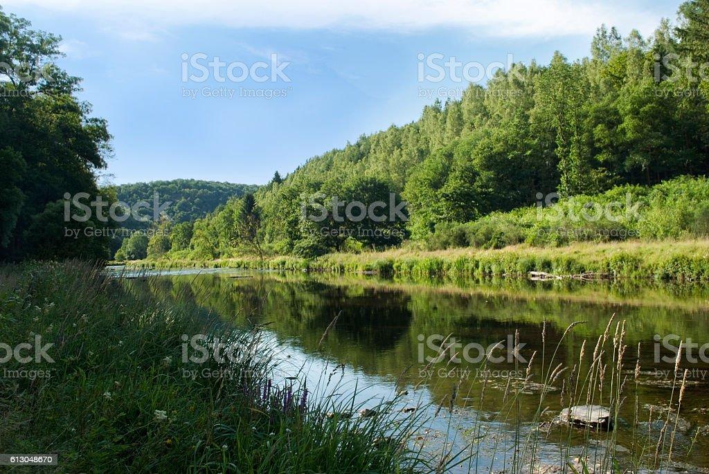 River flowing through green forest landscape foto