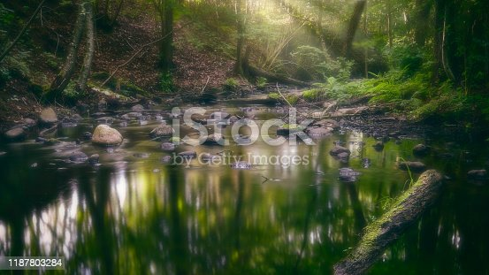 River flowing through the forest with sunbeams shining through the trees