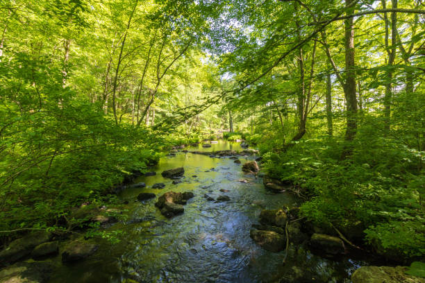 River flowing through the woods stock photo