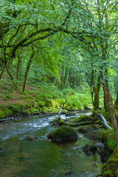 River Fowey and the Golitha Falls stock photo