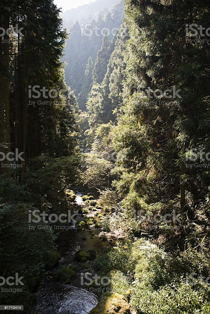 川の美しい谷 ロイヤリティフリーストックフォト