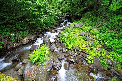 istock River in Caucasus mountains creek Abkhazia 525345818