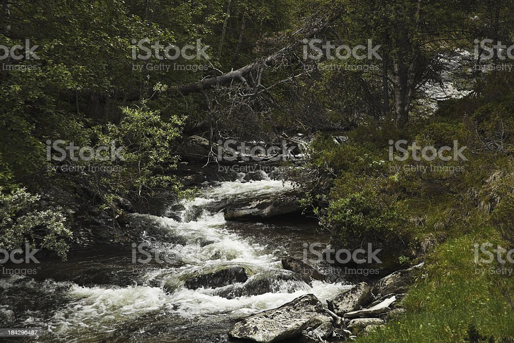 River in early summer. royalty-free stock photo