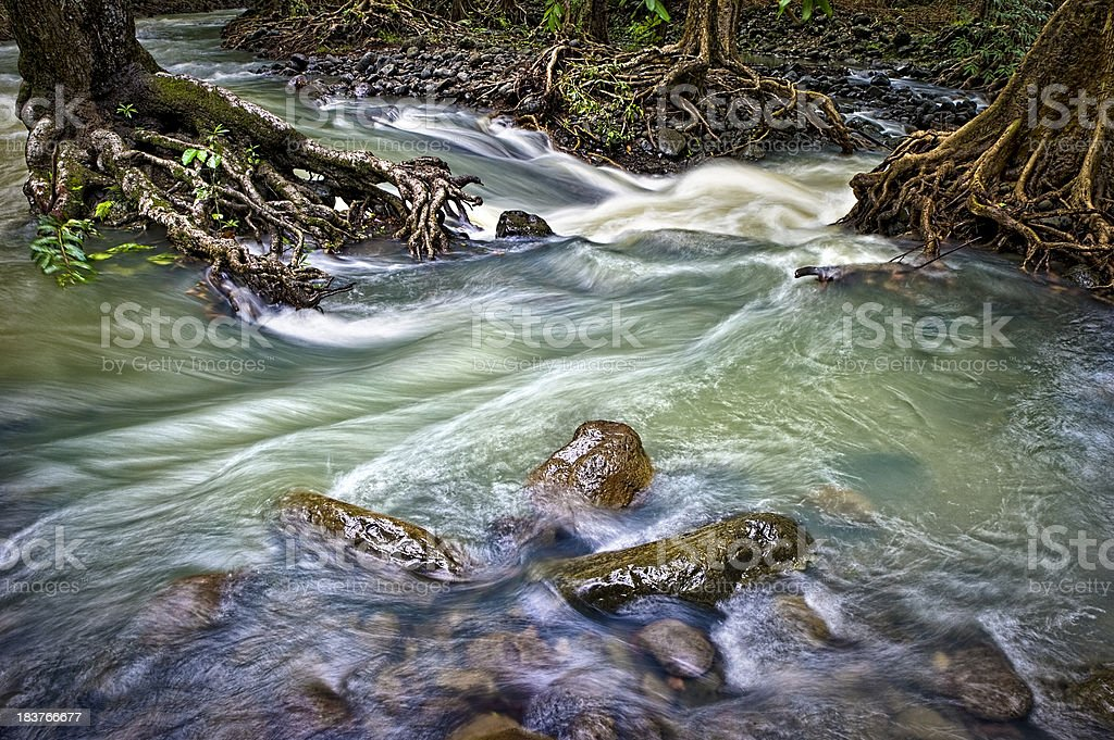 River in Forest royalty-free stock photo